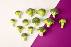 Broccoli on colored violet white background. Diagonal. Seasonal vegetables in modern style design pattern. Broccoli on colored violet white background. Diagonal Royalty Free Stock Photo
