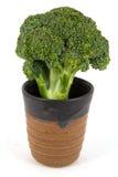 Broccoli dans la cuvette en céramique Images libres de droits