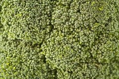 Broccoli Detail. A close-up of a broccoli with shallow depth of fields. Broccoli is a plant in the cabbage family, whose large flower head is used as a vegetable stock image