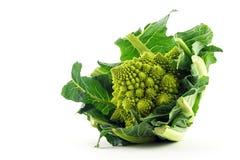 Broccoli di Romanesco o cavolfiore romano isolati su una parte posteriore di bianco Immagine Stock Libera da Diritti