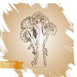 Broccoli di schizzo del fondo di vettore verdura Fotografia Stock Libera da Diritti
