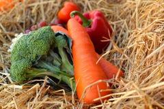 Broccoli ed uva degli ortaggi freschi su paglia Immagine Stock