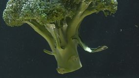 Broccoli falls into the water and swims. Close-up stock video