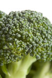 Broccoli Floret Stock Image
