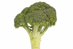 Broccoli Floret. Isolated On White stock images