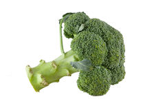 Broccoli floret Stock Photos