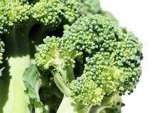 Broccoli florets Stock Image
