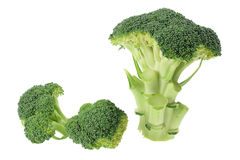 Broccoli Florets. On White Background Royalty Free Stock Photography