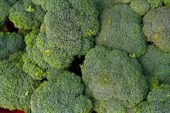 Broccoli Florets Royalty Free Stock Images