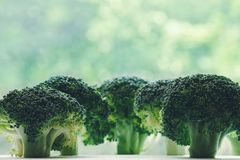 Broccoli florets neatly arranged looking like little trees Royalty Free Stock Image