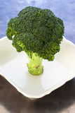 Broccoli. Flowering head on plate Stock Photography
