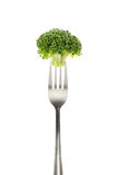 Broccoli on fork Stock Photo