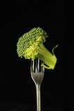 Broccoli Royalty Free Stock Photos