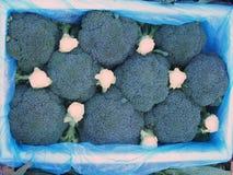 Broccoli frais Photographie stock libre de droits