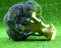 Broccoli frais Images libres de droits