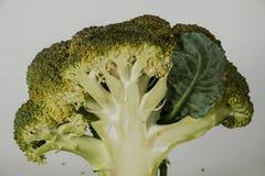 Broccoli freschi con le foglie Fotografie Stock