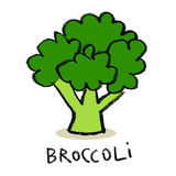 Broccoli. Fresh Broccoli, simple illustration, isolated Stock Images