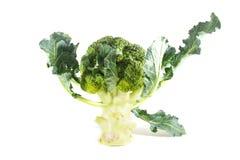 Broccoli. Fresh broccoli  on white background Stock Photos