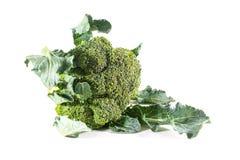 Broccoli. Fresh broccoli  on white background Stock Images