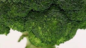 Broccoli giranti video d archivio
