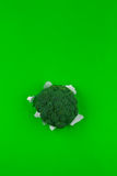 Broccoli on green background Royalty Free Stock Photo
