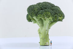 Broccoli. Green plant on a white background Royalty Free Stock Photos