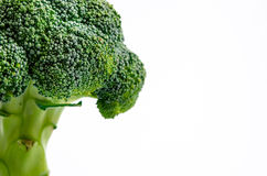 Broccoli. Half broccoli isolated on white background Royalty Free Stock Photography