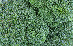 Broccoli head close view Stock Photography