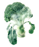 Broccoli head envelops smoke steam isolated white background Royalty Free Stock Photos