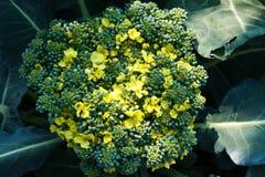 Broccoli, het ondubbelzinnig maken, groenten, broccolo Royalty-vrije Stock Foto