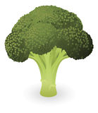 Broccoli illustration Royalty Free Stock Photo