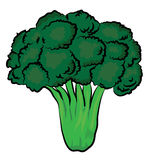 Broccoli illustration Stock Image