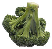 Broccoli Isolated. Fresh Green Broccoli Stalk Isolated on White with a Clipping Path Stock Images