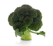 Broccoli isolated on a clean Royalty Free Stock Photos