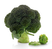 Broccoli isolated on a clean Royalty Free Stock Image