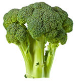 Broccoli isolated on white stock photography