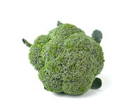Broccoli isolated on white ackground Stock Images