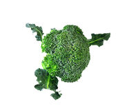Broccoli isolated on white background. Broccoli isolated on a white background Royalty Free Stock Photography