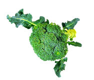 Broccoli isolated on white background. Broccoli isolated on a white background Stock Photo