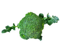 Broccoli isolated on white background. Broccoli isolated on a white background Stock Photos