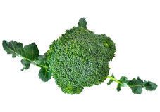 Broccoli isolated on white background. Broccoli isolated on a white background Royalty Free Stock Image