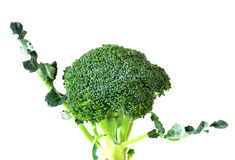 Broccoli isolated on white background. Broccoli isolated on a white background Royalty Free Stock Photos