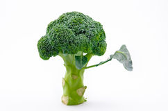 Broccoli. Isolated on white background Stock Photos