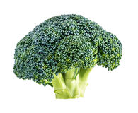 Broccoli isolated on white Stock Images