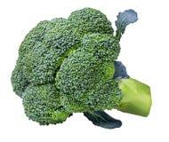 Broccoli isolated on white Royalty Free Stock Image
