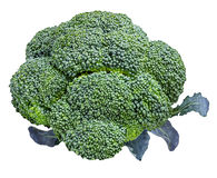 Broccoli isolated on white Royalty Free Stock Photography