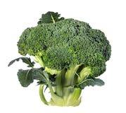 Broccoli isolated on white Stock Image