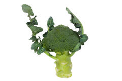 Broccoli isolated on white background. Beautiful Broccoli isolated on the white background Royalty Free Stock Photo
