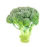 Broccoli isolated on white background. Closeup broccoli isolated on a white background Stock Image