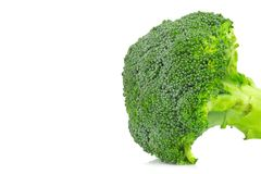 Broccoli isolated on white background. closeup header.  Royalty Free Stock Photography